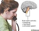 Brainstem function