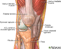 The structure of a joint