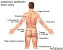 Anatomical landmarks adult – back