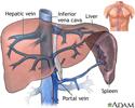 Hepatic venous circulation