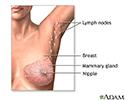 Mastectomy - series - Normal anatomy