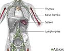 Immune system structures