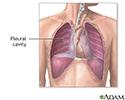 Pleural cavity